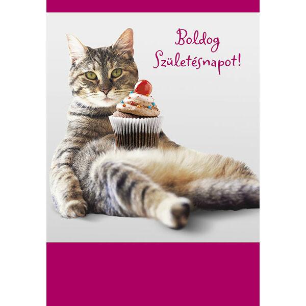 cicás szülinapi képeslapok Cicás képeslap   Boldog születésnapot   Képeslapok   RajzfilmJátékok cicás szülinapi képeslapok